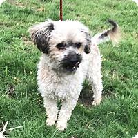 Adopt A Pet :: Axel - Tumwater, WA