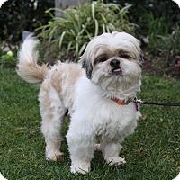 Adopt A Pet :: STEFAN - Newport Beach, CA