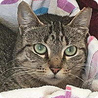Adopt A Pet :: LaMere - Elmwood Park, NJ