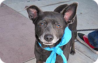 Terrier (Unknown Type, Medium) Mix Dog for adoption in Wildomar, California - Soda