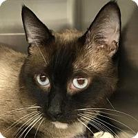 Adopt A Pet :: Colin - Fairport, NY