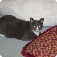 Adopt A Pet :: Patty - Secaucus, NJ