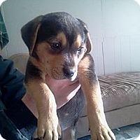 Adopt A Pet :: Memphis - Bradenton, FL