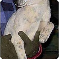 Adopt A Pet :: Dixie - Lucerne Valley, CA
