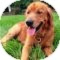Adopt A Pet :: Beck - Denver, CO