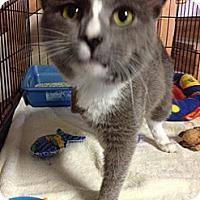 Adopt A Pet :: Tripp - Byron Center, MI