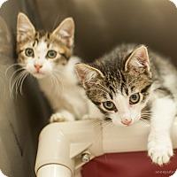 Adopt A Pet :: Lil - Athens, GA