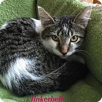 Adopt A Pet :: Tinkerbell - Baton Rouge, LA