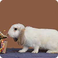 Adopt A Pet :: Ares - Marietta, GA