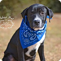 Adopt A Pet :: Spot - Fort Valley, GA