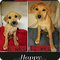 Adopt A Pet :: Brecken pending adoption - Manchester, CT