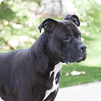 Adopt A Pet :: Angus - Chula Vista, CA