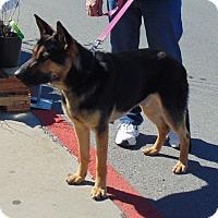 Adopt A Pet :: Cameron - Somers, CT