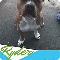 Adopt A Pet :: Ryder - North Kingstown, RI