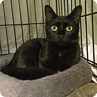 Adopt A Pet :: Bethany - East Brunswick, NJ
