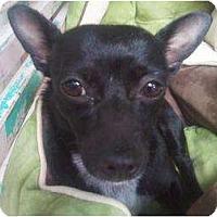 Adopt A Pet :: JOSEY - Houston, TX