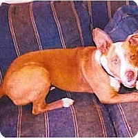 Adopt A Pet :: Lucious - Flint (Serving North and East TX), TX
