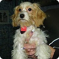Adopt A Pet :: Shushna - South Amboy, NJ