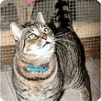 Adopt A Pet :: Miss Lucy - Cleveland, OH
