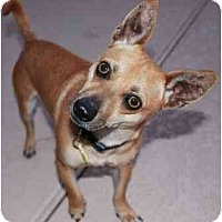 Adopt A Pet :: Juggernut - Gilbert, AZ