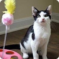 Adopt A Pet :: Abigail - Xenia, OH