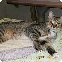Adopt A Pet :: Cortex - Dover, OH
