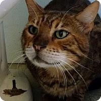 Adopt A Pet :: Teddy Bear - Morgan Hill, CA