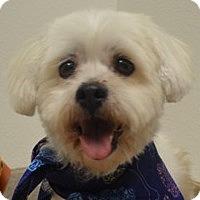 Adopt A Pet :: Tally - La Costa, CA