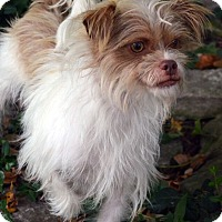 Adopt A Pet :: Elana-Adoption pending - Bridgeton, MO