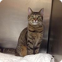Adopt A Pet :: Petco#2  Lucy - Triadelphia, WV