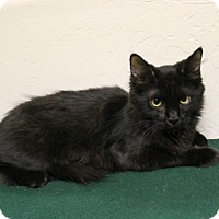 Adopt A Pet :: Camille - Fountain Hills, AZ