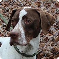 Adopt A Pet :: Miss Cooper - Allentown, PA