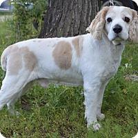 Adopt A Pet :: Wyatt - Campbell, CA