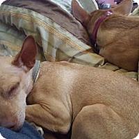 Adopt A Pet :: Rango - Roger That Cute Boy! - Seattle, WA