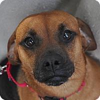 Adopt A Pet :: Delilah - Atlanta, GA
