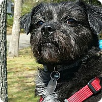 Adopt A Pet :: Wendy - Plainfield, CT