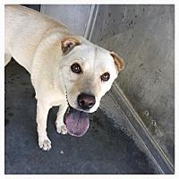 Adopt A Pet :: Audrey - pending - Mira Loma, CA