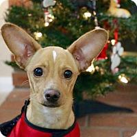 Adopt A Pet :: Reign - La Verne, CA
