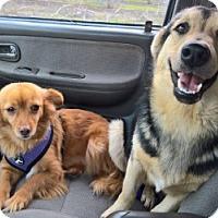 Adopt A Pet :: DIXIE - Gustine, CA
