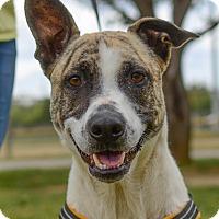 Adopt A Pet :: Chapman - Greenwood, SC
