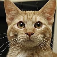 Adopt A Pet :: Maynard - Overland Park, KS