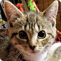 Adopt A Pet :: Harley - Walworth, NY