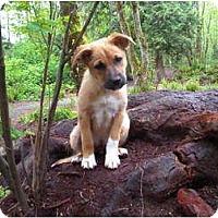 Adopt A Pet :: Bella - Pending - Vancouver, BC