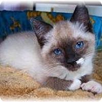 Adopt A Pet :: Elizabeth - Shelton, WA