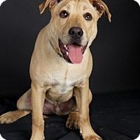 Adopt A Pet :: Duke - Nuevo, CA