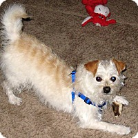 Adopt A Pet :: Peanut - Osseo, MN
