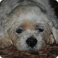 Adopt A Pet :: Arlo - Austin, TX
