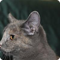 Adopt A Pet :: Paisley - Medina, OH