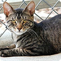 Adopt A Pet :: Newton - Forked River, NJ
