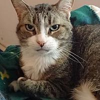 Adopt A Pet :: Nonnie - Carencro, LA